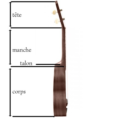 anatomie du ukulele